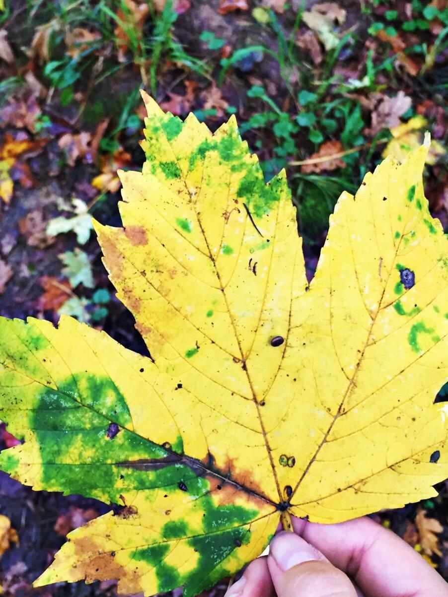 Gelbes Blatt - Fotoidee für den Herbst
