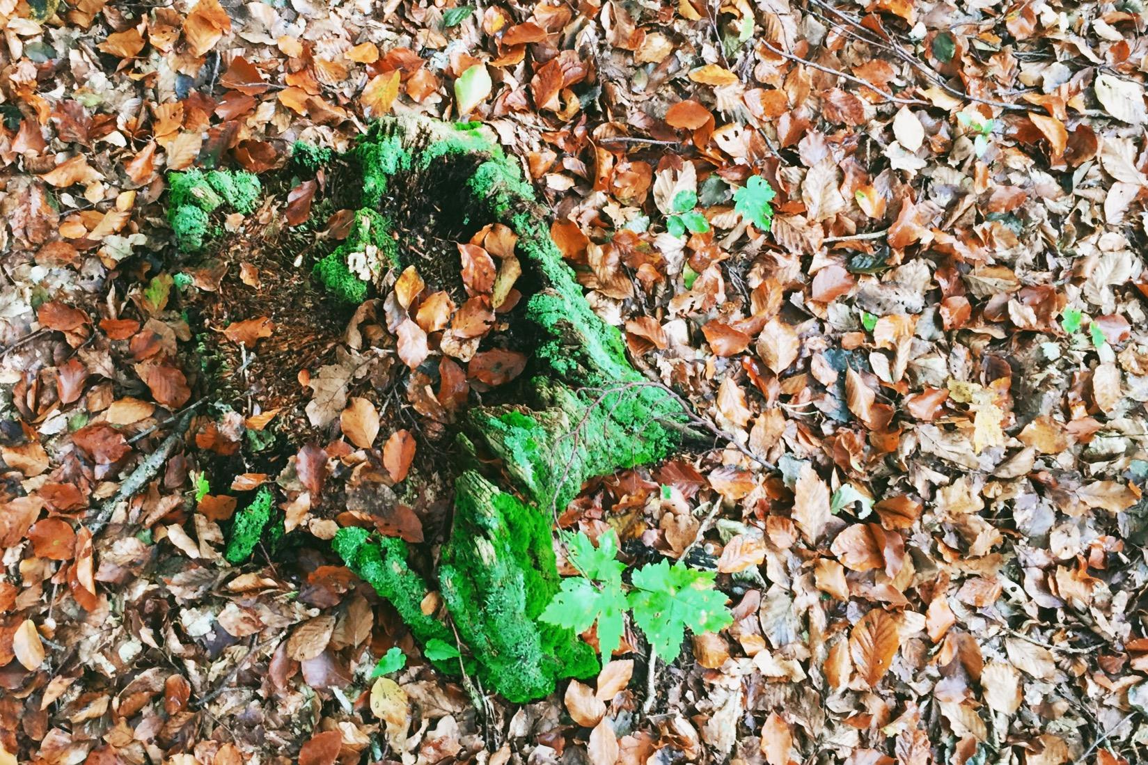 Herz im Wald zwischen Laub - Fotoidee für den Herbst