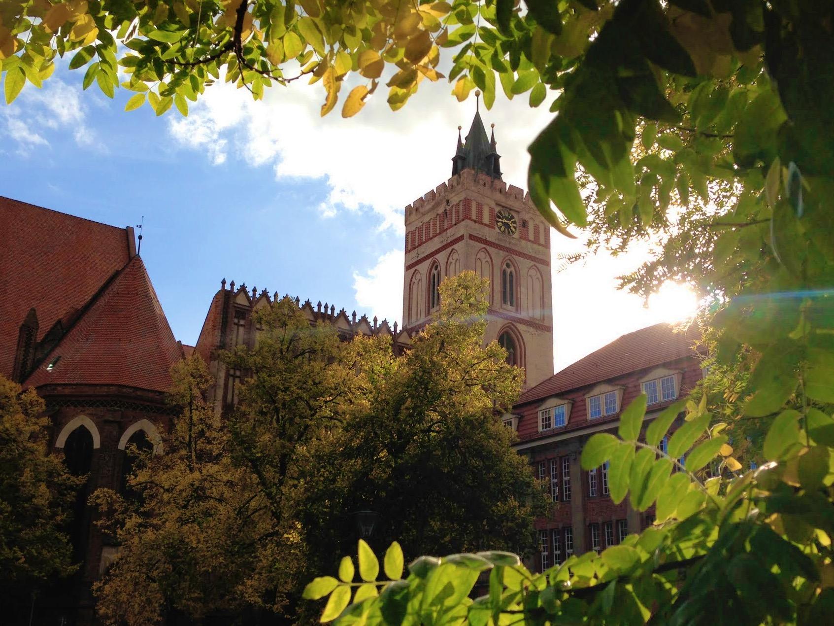 Sonnenstrahlen zwischen Blättern - Fotoidee für den Herbst